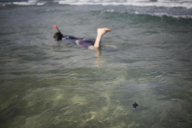 Israeli sea turtles get helping hand