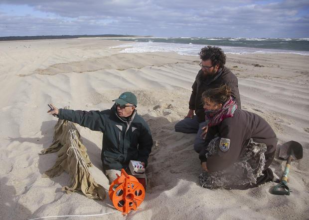Saving shore birds in Cape Cod