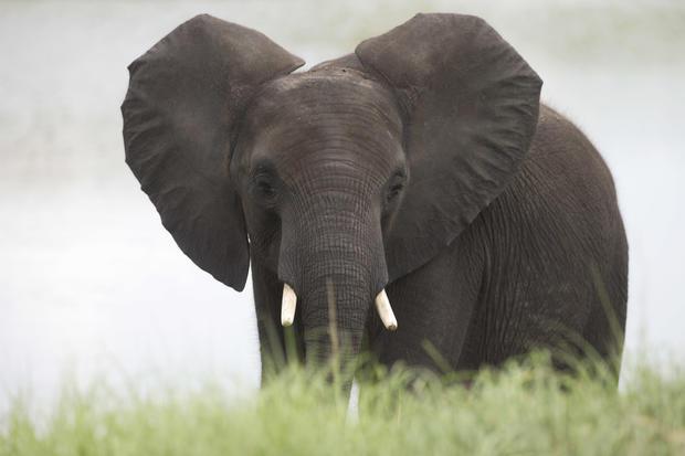 Elephants in the orange grove