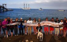 "18-foot ""sea serpent"" caught off Calif. coast"