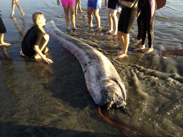 oarfish, california