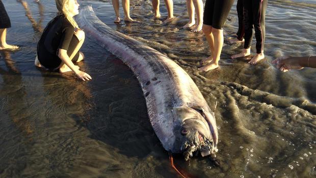 oarfish, california