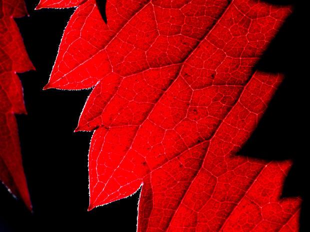 Fall colors 2013