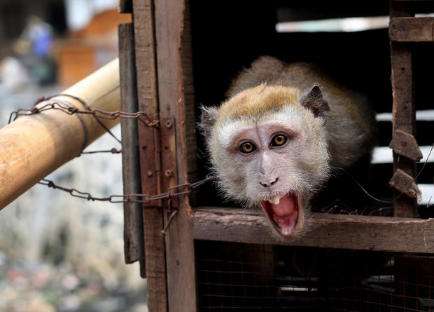 Crackdown on monkey business