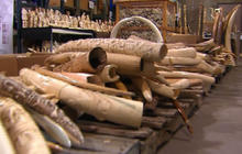 ivory objects seized by U.S. authorities