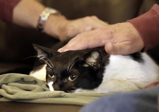 Pet hospice