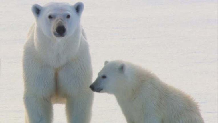 polar_bear_segment.JPG