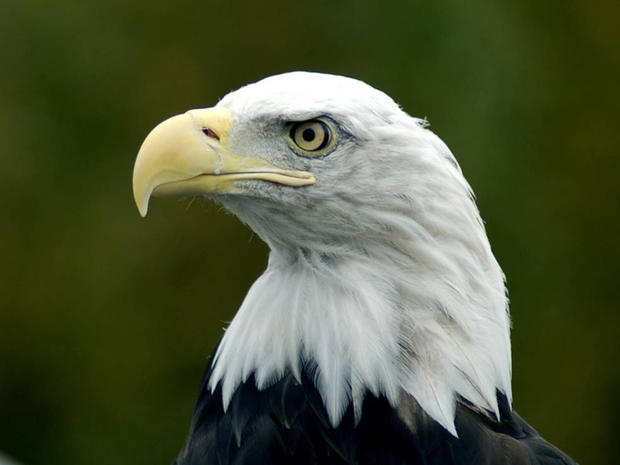 Species saved by the Endangered Species Act