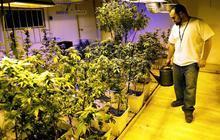 Recreational pot shops open in Colorado