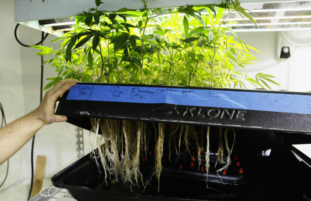 Recreational pot shops open in Colorado