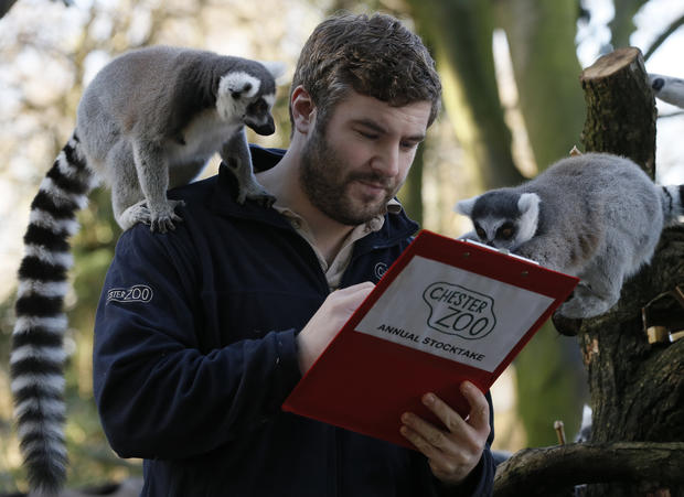 Census day for British zoos