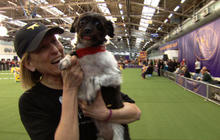 Westminster dog show allows mixed-breed entries for the first time