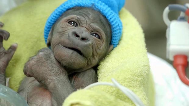 np-031914-gorilla-640x360.jpg