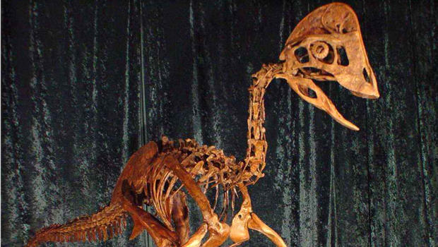 A reconstruction of the skeleton of the dinosaur Anzu wyliei is seen in this undated picture provided by the Carnegie Museum of Natural History March 18, 2014. The birdlike animal, about 7 feet tall, weighed an estimated 500 pounds when it roamed western