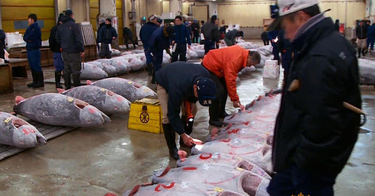 A tour of tokyo 39 s largest fish market cbs news for Wholesale fish market near me