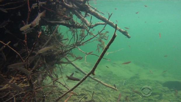 加州干旱salmon.jpg