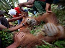 palm-oil-indonesia-2.jpg