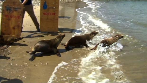 sea-lions-beach.jpg