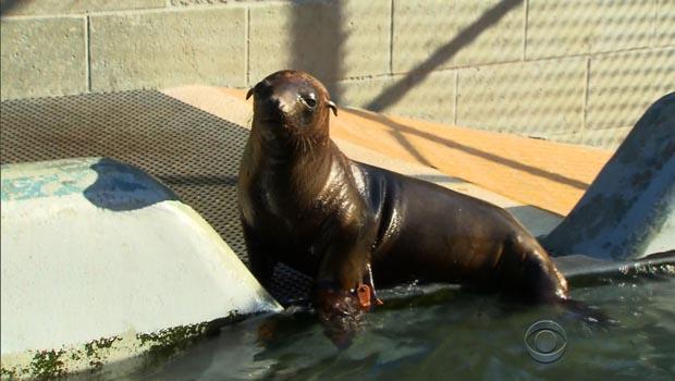 sea-lions-hoppie.jpg