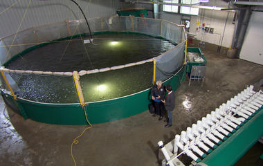 Salmon farms of the future?