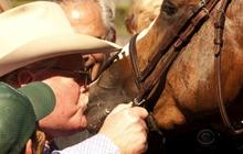 California Chrome's unlikely race to the top