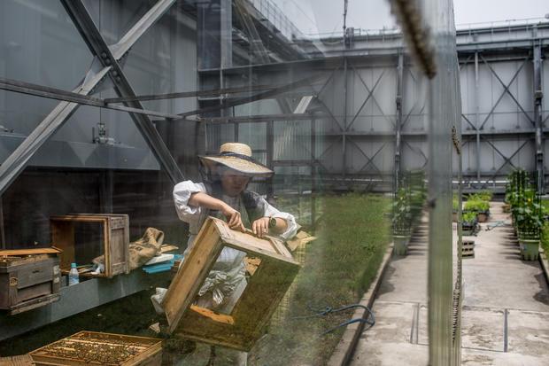 Rooftop beekeepers