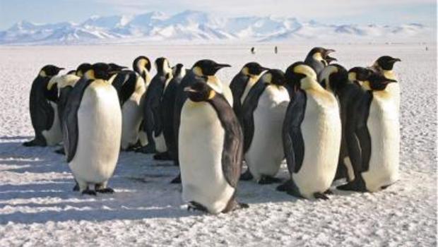 emperor-penguins74988web.jpg
