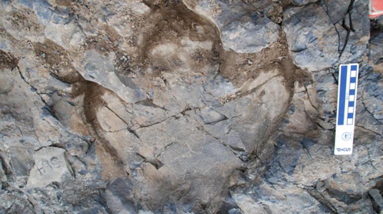 hadrosaur-track.jpg