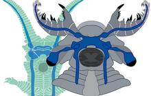 velvet-worm-anomalocaridid.jpg