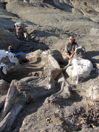Photos: Huge dinosaur skeleton unearthed