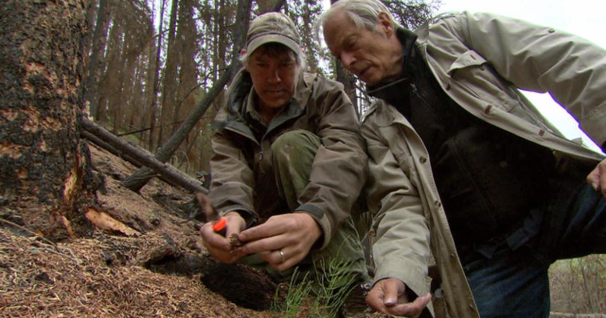 protecting the mushroom from -#main