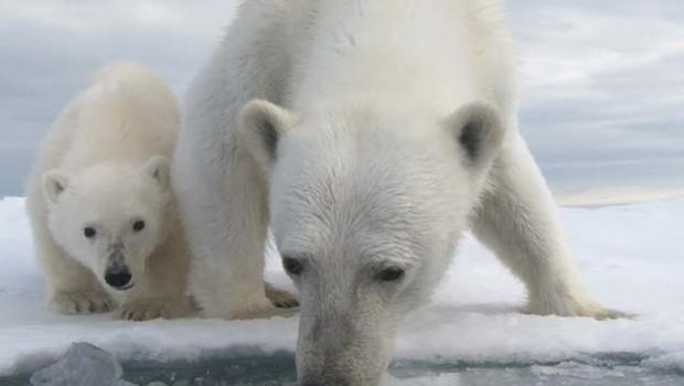11 species threatened by climate change