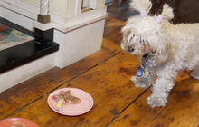 Is a raw food diet good for your pet?