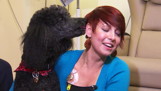 Can Pet Therapy Dogs Visit Cancer Patients