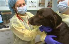 Canine influenza reaching epidemic proportions