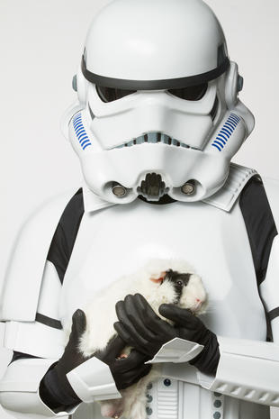May the furs be with you
