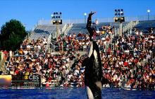 New documentary renews debate over keeping whales in captivity