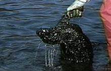1999: Exxon Valdez, 10 Years Later