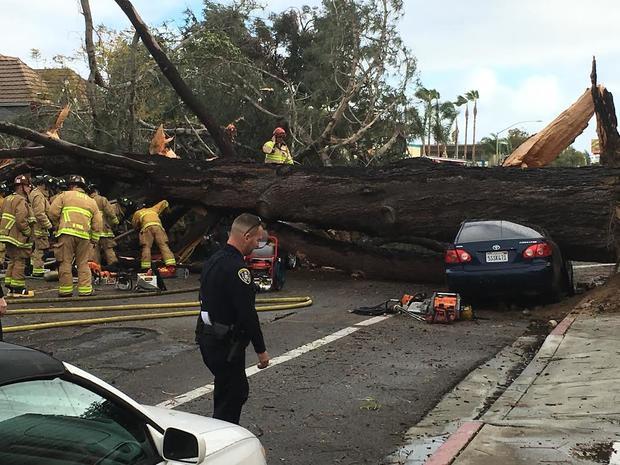 tree car dead