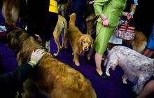 Backstage at the Westminster Dog Show