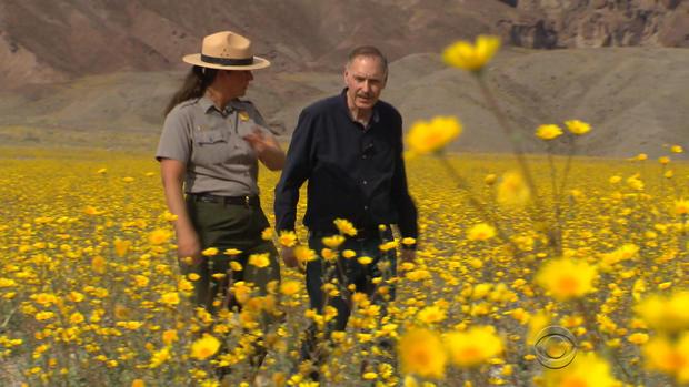 死亡谷的花朵 -  2.JPG