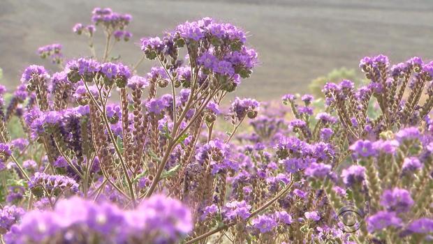 death-valley-flowers-3.jpg