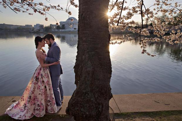 Image result for cherry blossom washington dc romance