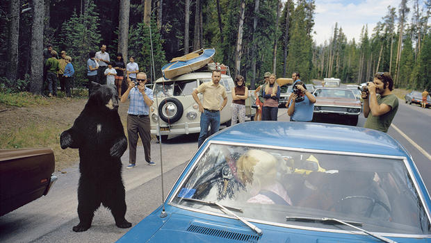 yellowstone national park single guys See old faithful, bison, wolves, and grizzly bears we show you the top things to  do and the best places to stay in the park and a road trip vacation.