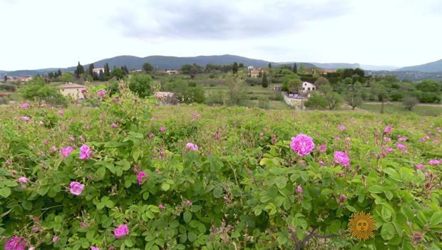 玫瑰 - 南 - 的 - 法国 - 房子的 - 迪奥 -  620.jpg