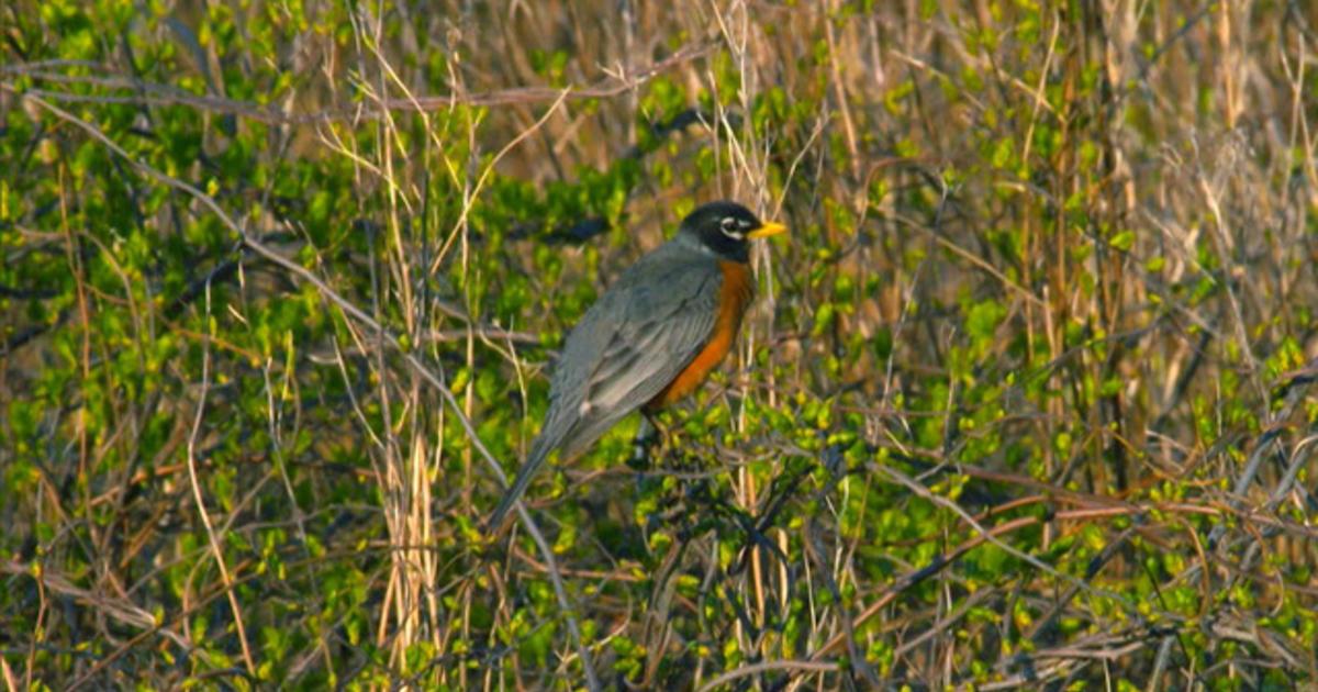 Nature: Sachuest Point National Wildlife Refuge