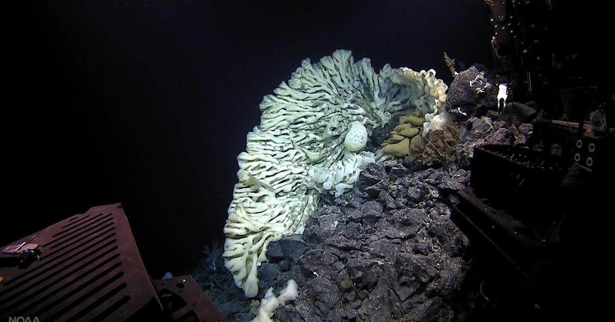 This minivan-sized sponge is the largest ever found