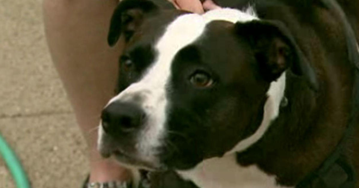 Dog retrieves part of hand after man loses it in firecracker explosion