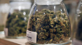Legalize it? 60 Minutes viewers pipe up on the pot vote