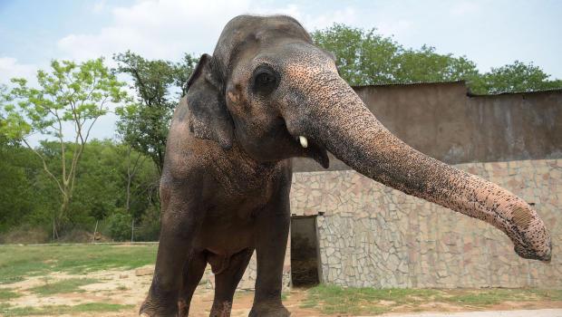 Aalborg Zoo rabat Kolding girls Vejlevej